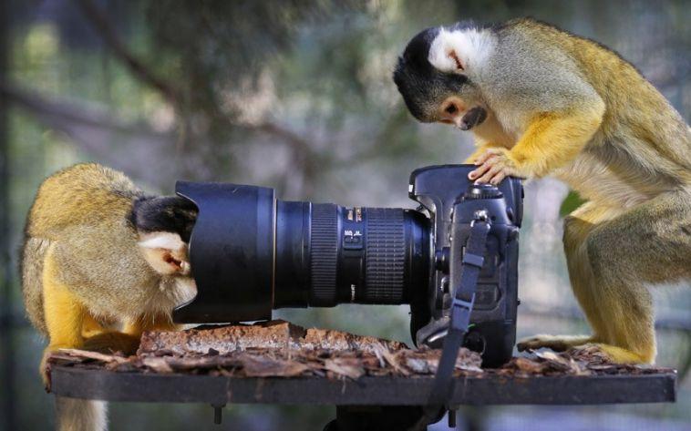 monkeycamera