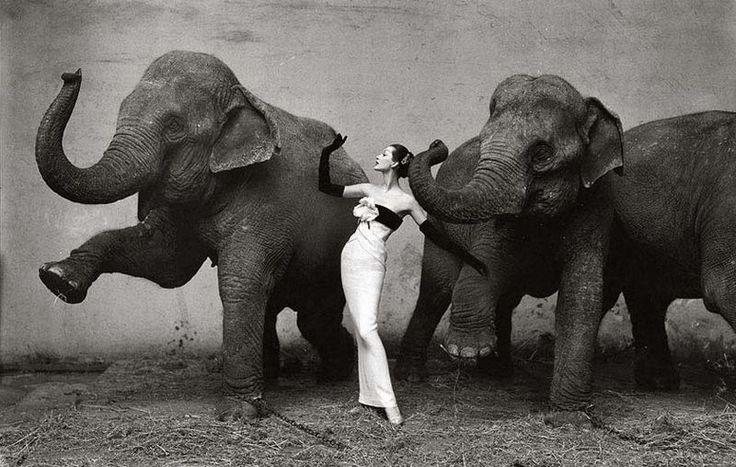 avedon_elephant